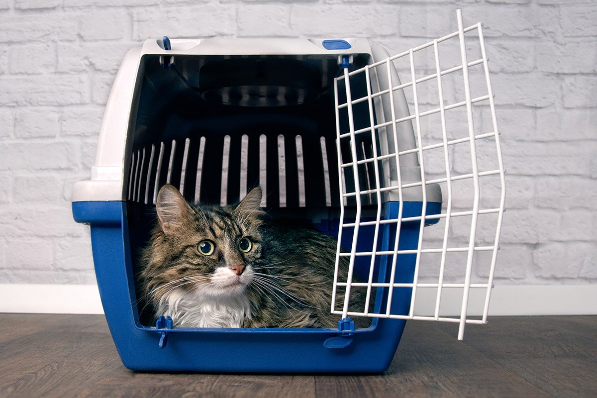 Cat Transport from PetsA2B