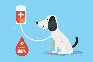 Dog Blood Donation