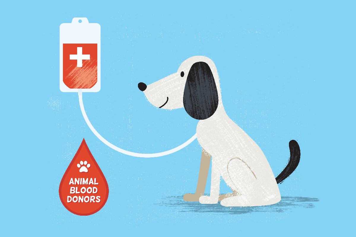 Dog Blood Donation