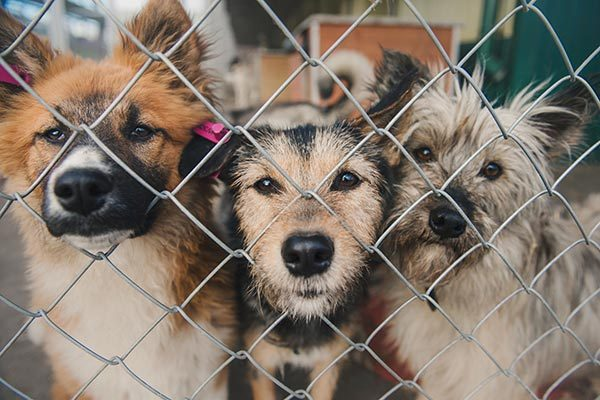 Pet Charities & Shelters